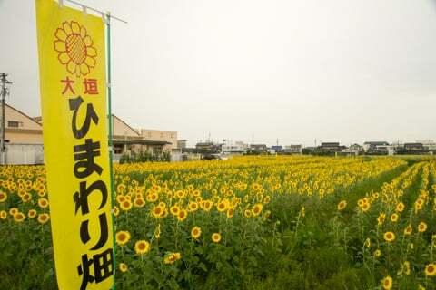 2015年墨俣町のひまわり畑の予定地の写真