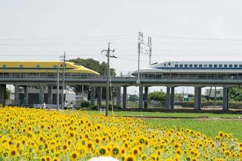 ドクターイエローと新幹線のスライドとひまわりの写真