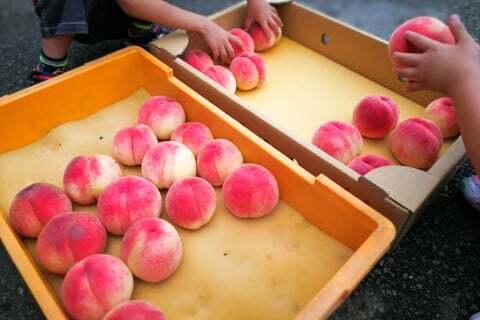 買った桃の移動作業の写真