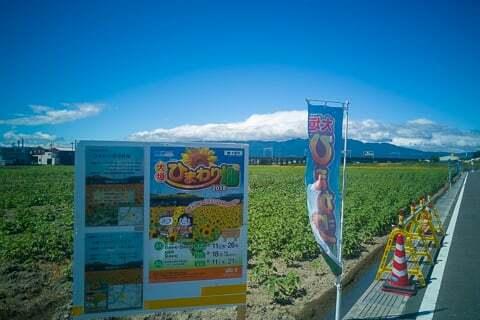 大垣市のひまわり畑の写真