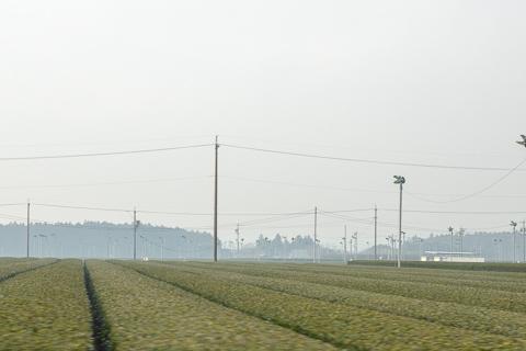 伊勢茶の栽培の写真