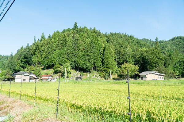 入間地区の写真